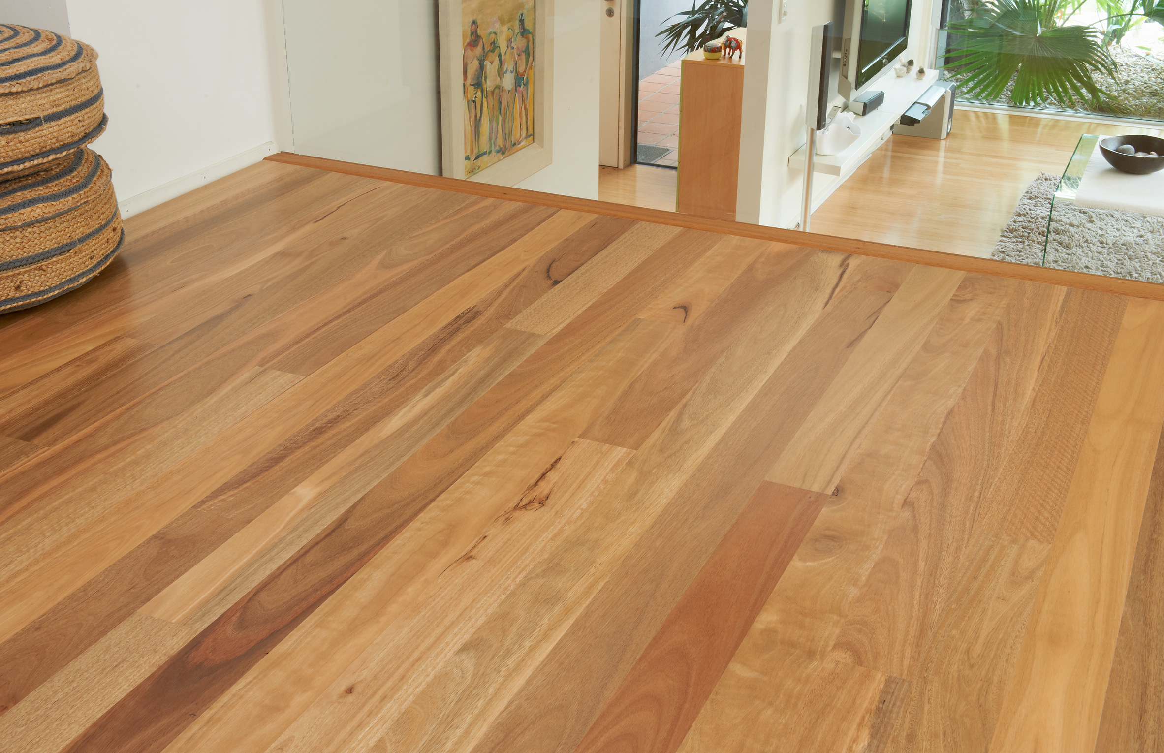 Spotted gum ecorymbia maculata gloria timber flooring for Timber flooring